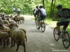 mountainbike-bustenari-01